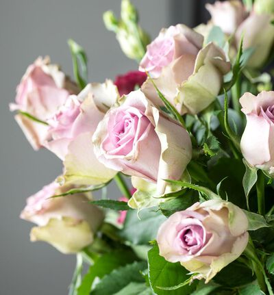 Lilla roser i gavepose