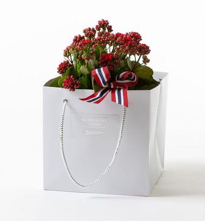 Rød calandivia i gavepose med sløyfe