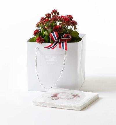 Rød calandivia i gavepose med servietter