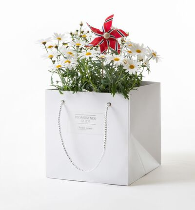 Margeritt i gavepose med vindmølle