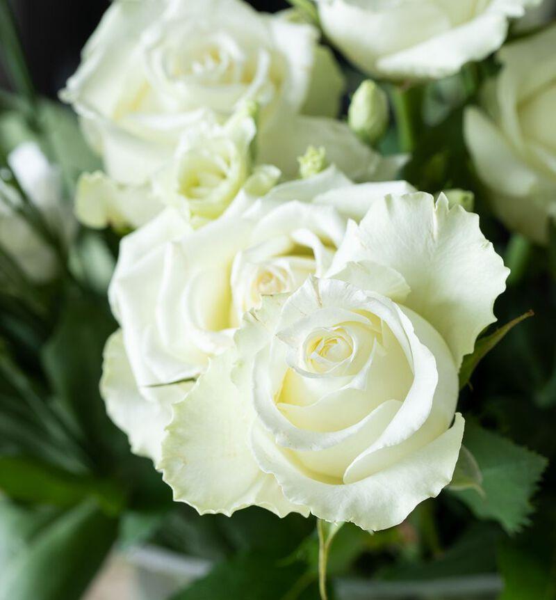 Hvite roser i gavepose image number null