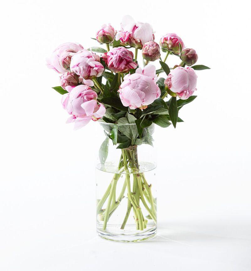 Rosa peonbukett L image number null