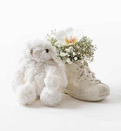 Hvit orkidè i babysko med bamse