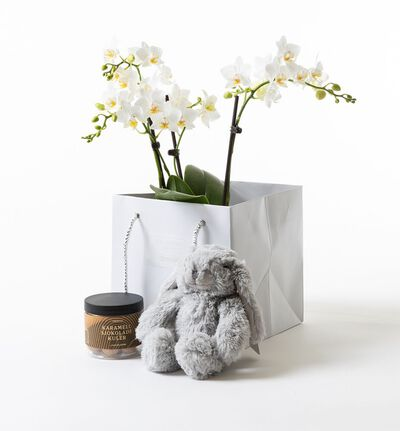 Hvit orkidè i gavepose med bamse og sjokolade