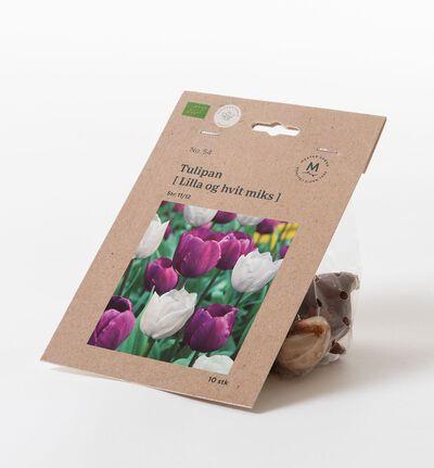 Tulipan lilla og hvit høstløk