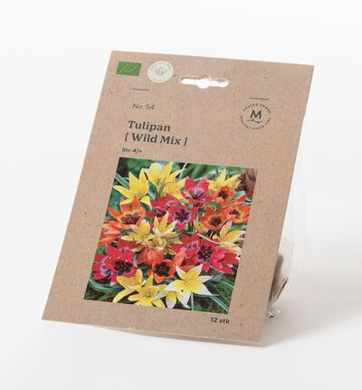 Tulipan wild mix høstløk