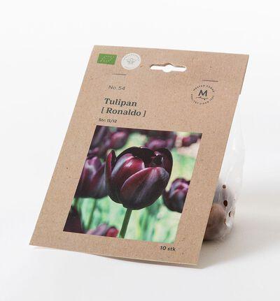 Tulipan triumph ronaldo