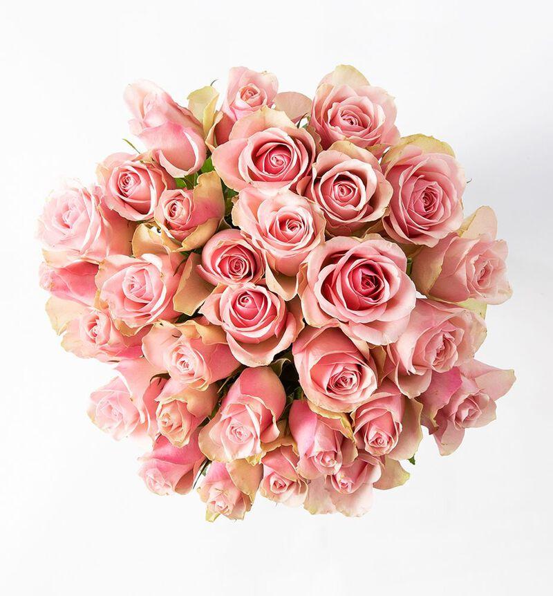 30 rosa roser bildenummer 2