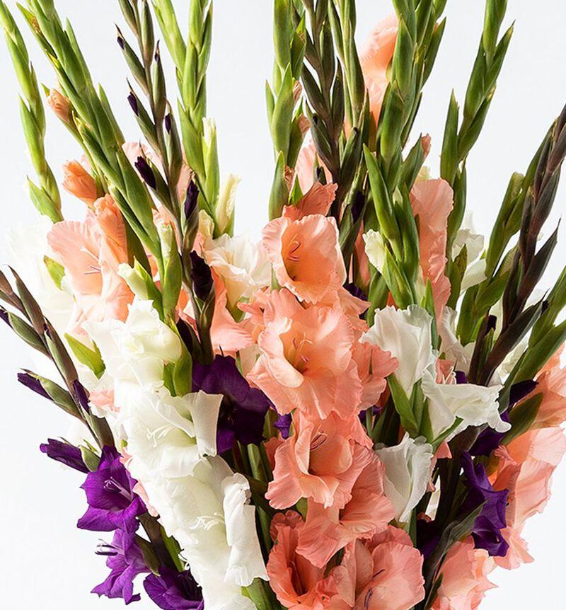 Gladiolbukett kalde farger bildenummer 2