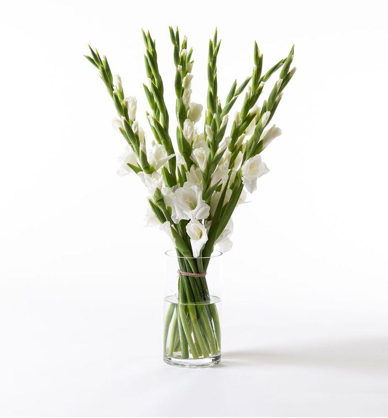 Hvit gladiolbukett bildenummer 1