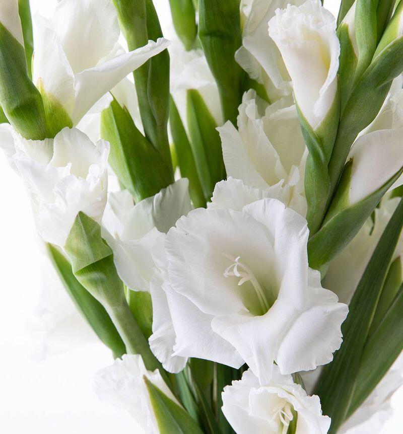 Hvit gladiolbukett bildenummer 2