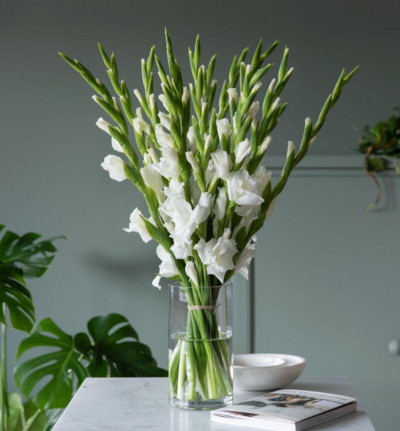 Hvit gladiolbukett bildenummer 3