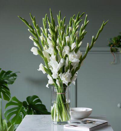 Hvit gladiolbukett