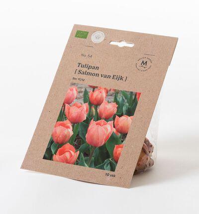 Tulipan van eijk høstløk