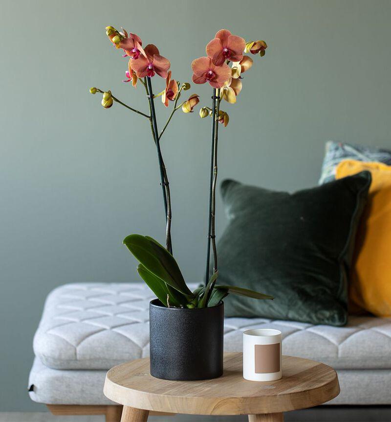 Antrasitt sort blomsterpotte M bildenummer 2