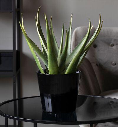 Kunstig Aloe M