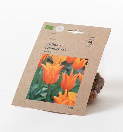 Tulipan ballerina høstløk