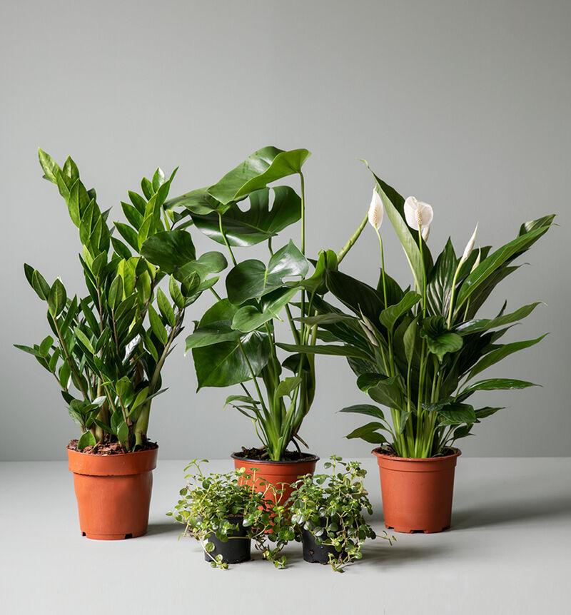 Medium lettstelt plantepakke  bildenummer 1