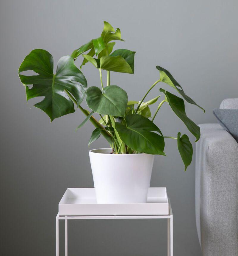 Medium lettstelt plantepakke  bildenummer 2
