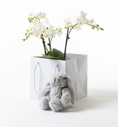 Hvit orkidè i gavepose med bamse