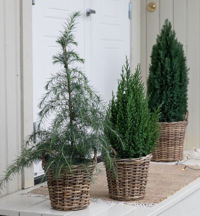 Stor plantepakke til inngangspartiet
