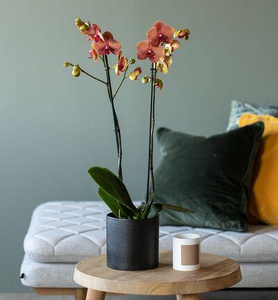 Antrasitt sort blomsterpotte M