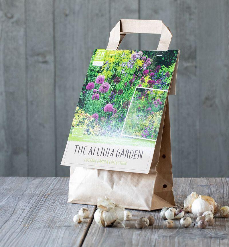 Bievennlig Allium mix høstløk  bildenummer 1