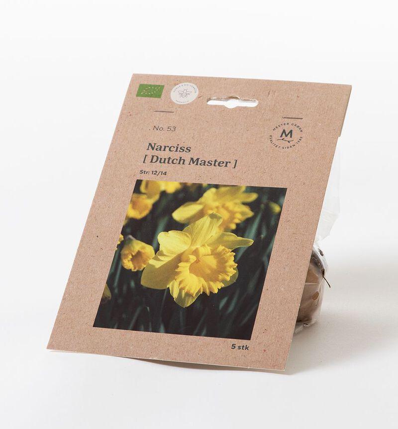 Narciss dutch master høstløk bildenummer 1