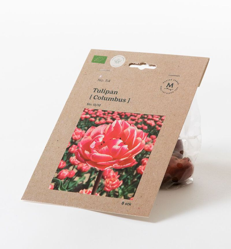 Tulipan columbus høstløk bildenummer 1