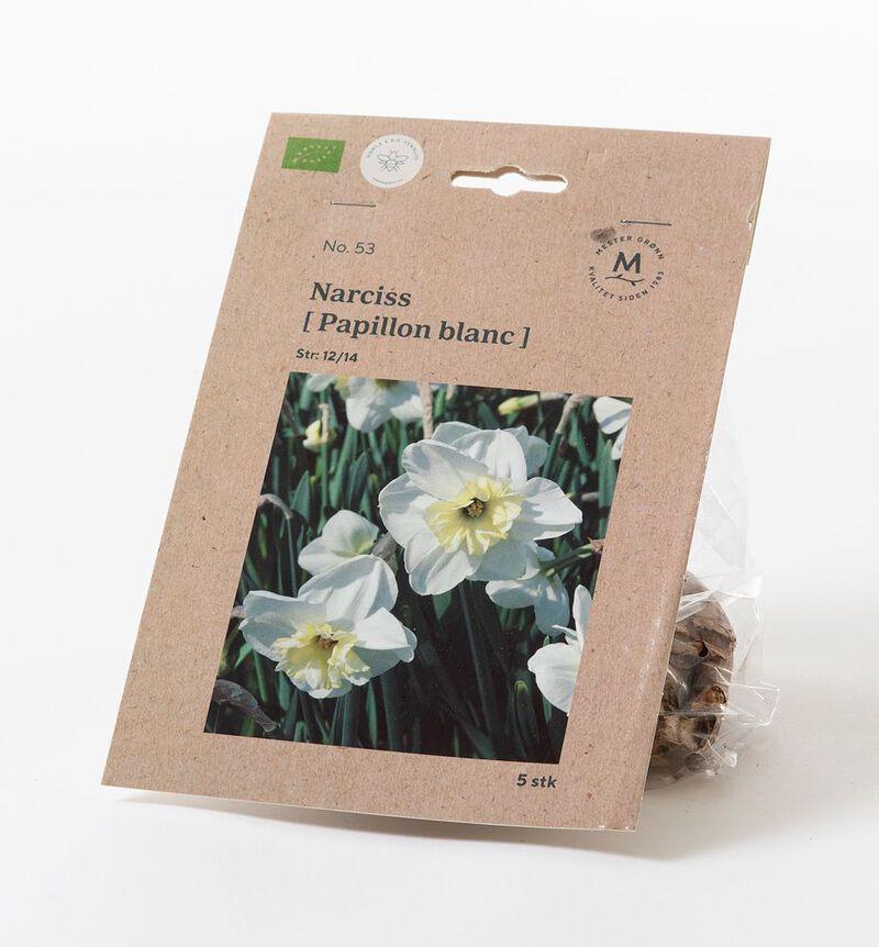 Narciss papillon blanc høstløk bildenummer 1