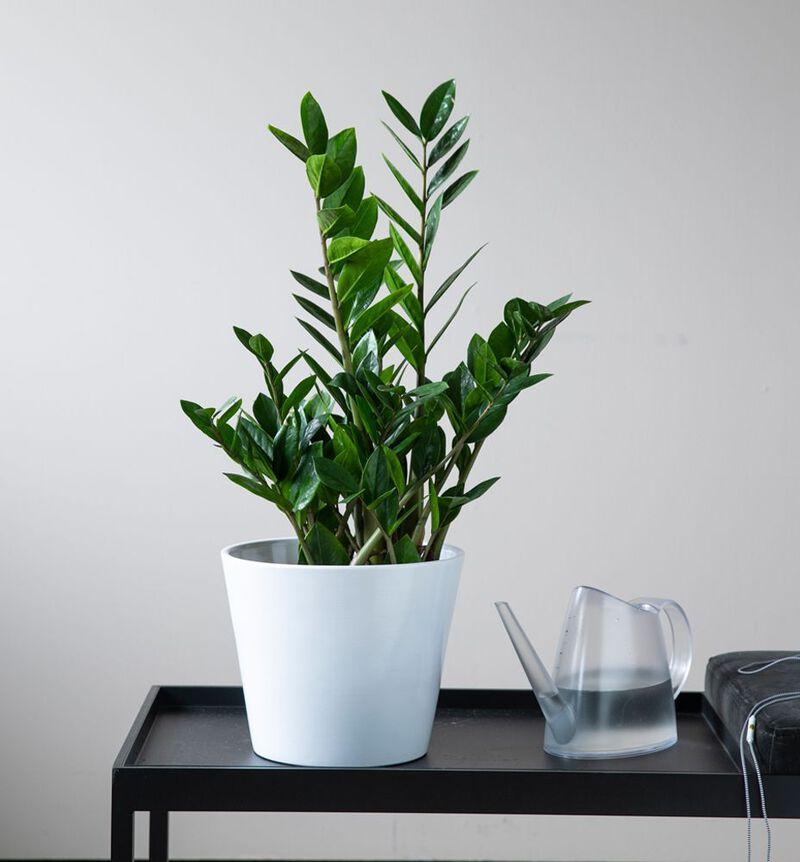 Liten lettstelt plantepakke bildenummer 2