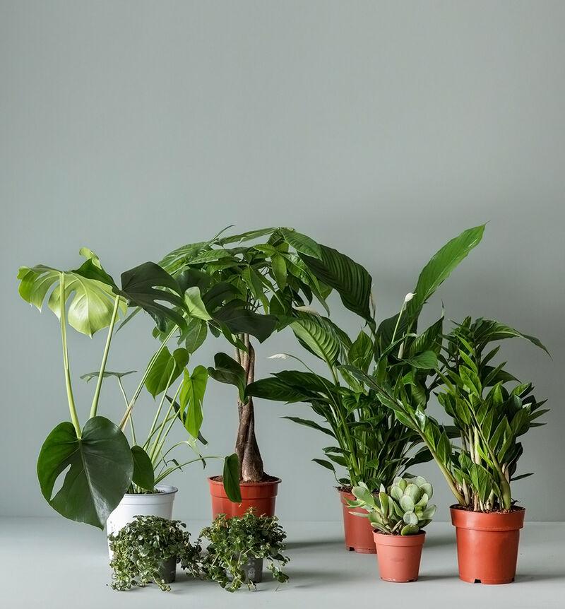 Stor lettstelt plantepakke bildenummer 1