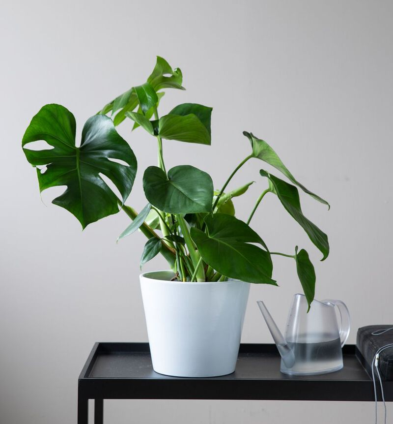 Stor lettstelt plantepakke bildenummer 2