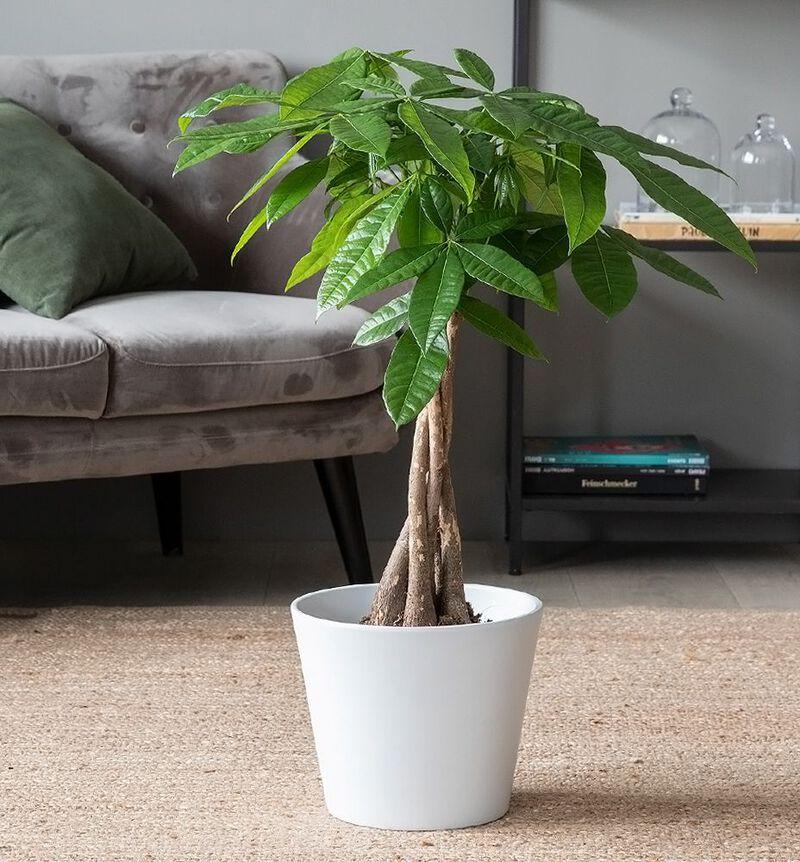 Stor lettstelt plantepakke bildenummer 3