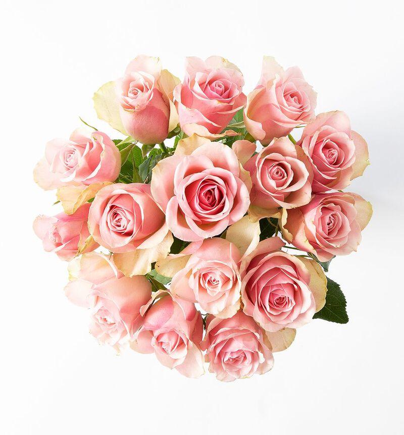 Rosa roser i gavepose med bobler og sjokolade bildenummer 2