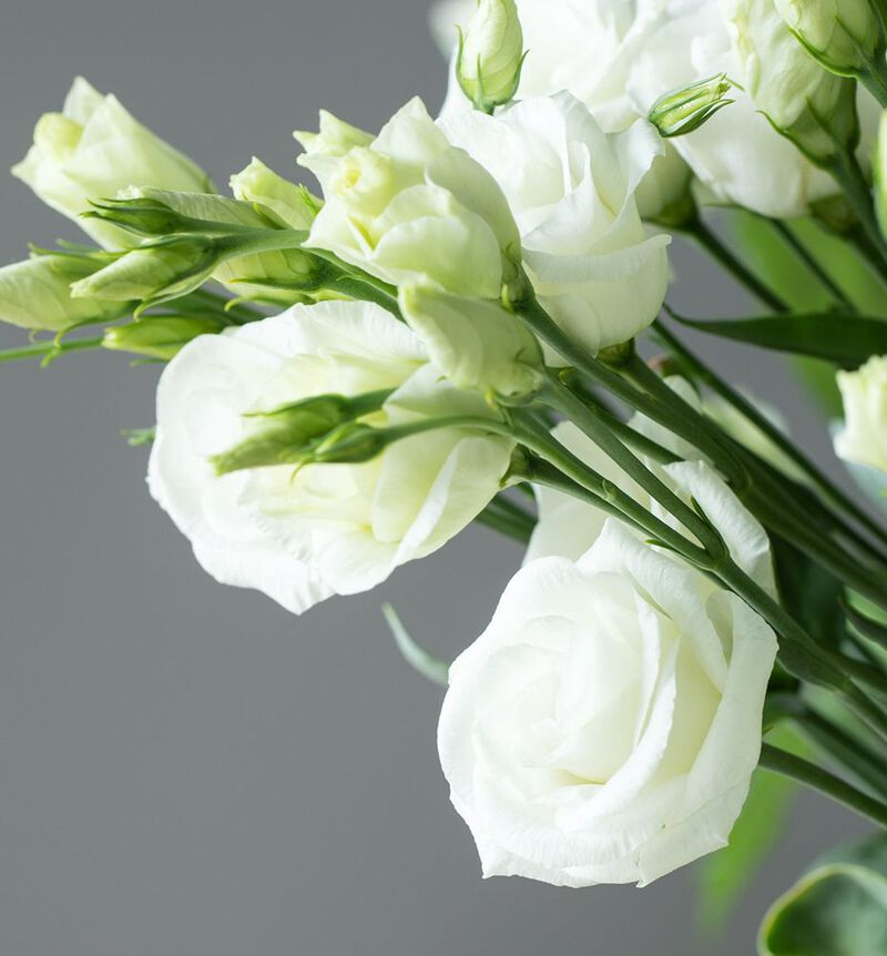 Hvit lisianthus bildenummer 2
