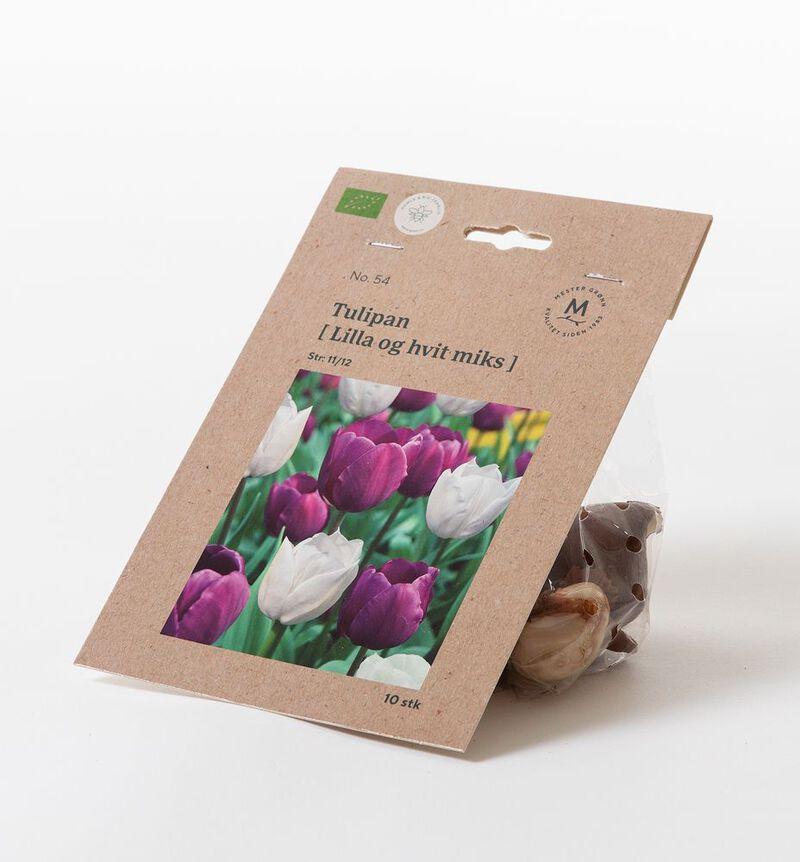 Tulipan lilla og hvit høstløk bildenummer 1